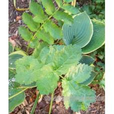 Plante5
