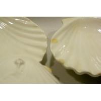 picture-white-scallop-shell-ceramic-3